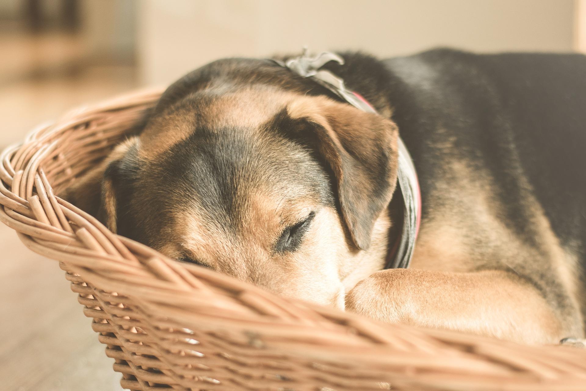 Der ideale Standort für das Hundebett