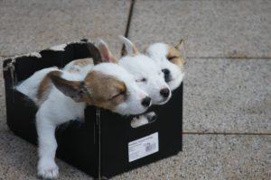 Beliebte Hundebetten - Eine Kaufberatung