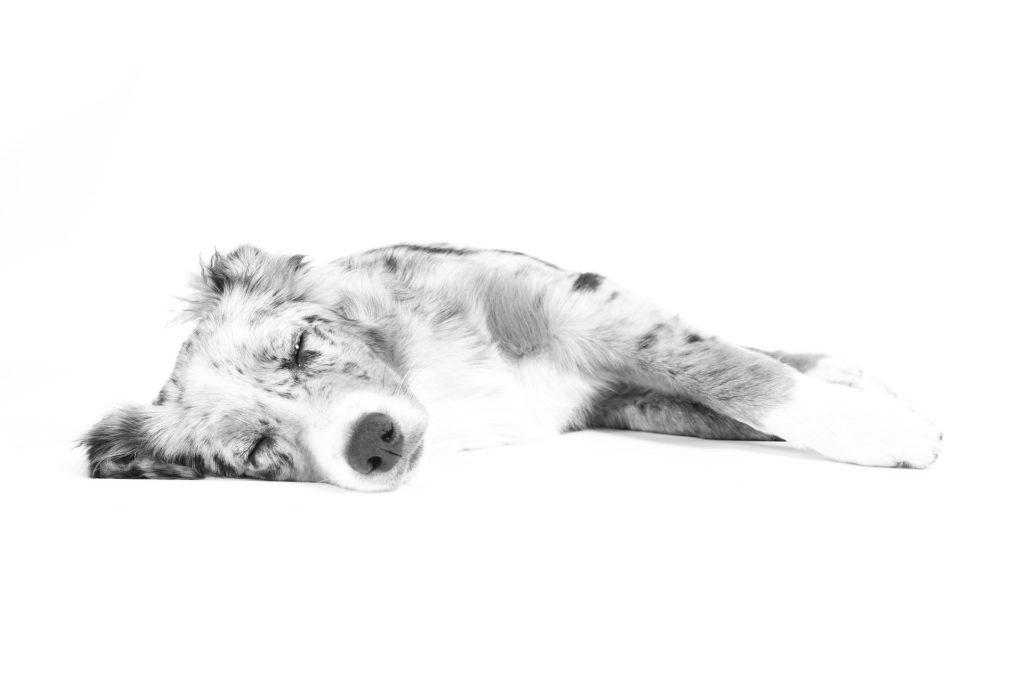 Was beeinflusst das Schlafverhalten Deines Hundes