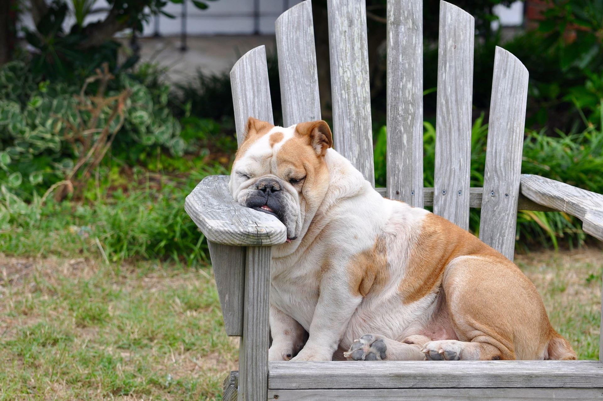 Das Schlafbedürfnis des Hundes kann sehr variieren