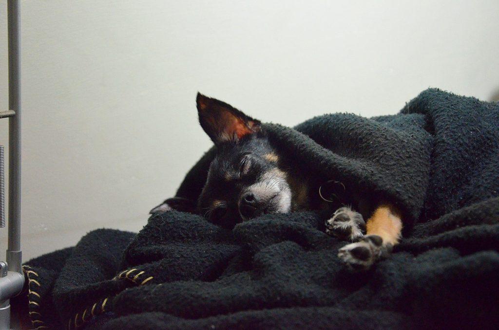 Schlafphasen des Hundes