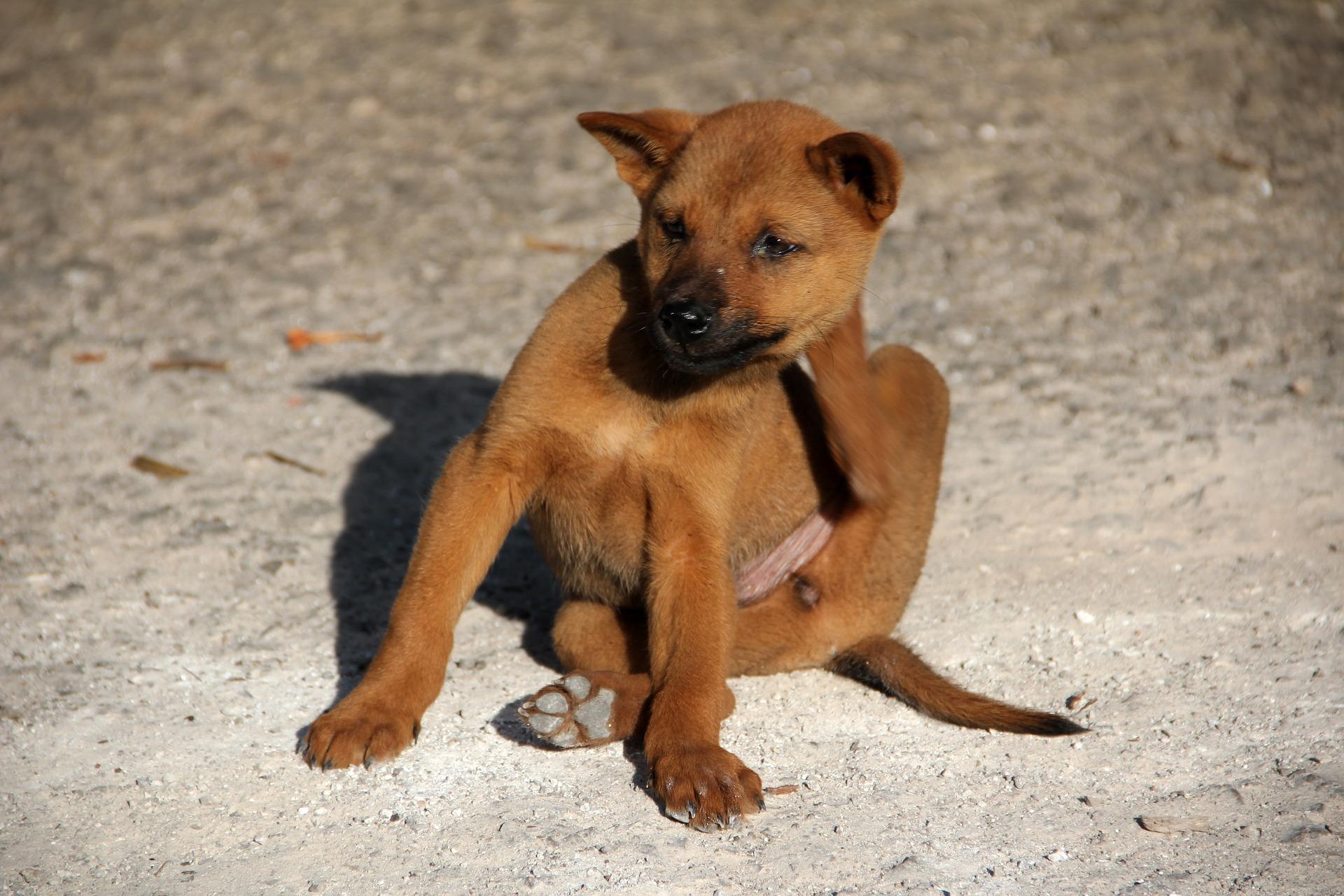 Fklöhe im Hundebett - Kein Grund zur Panik