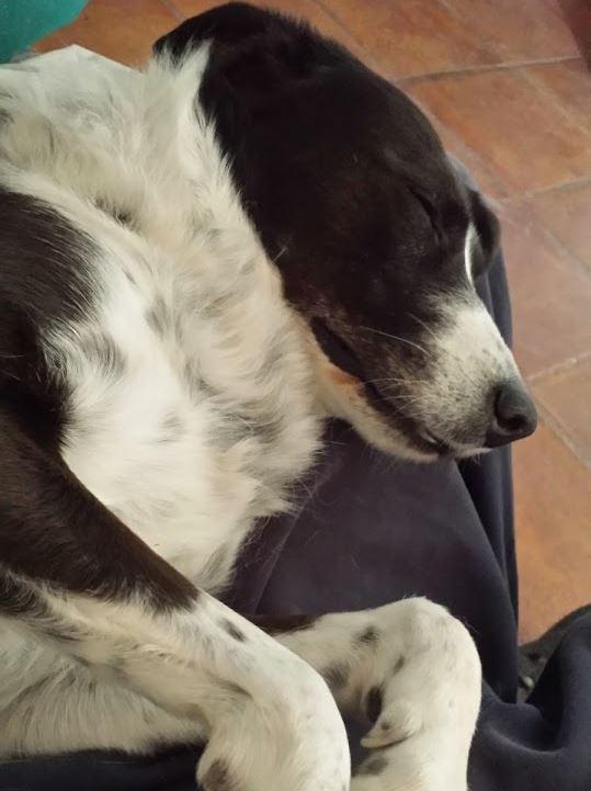 Hilfe, mein Hund schnarcht