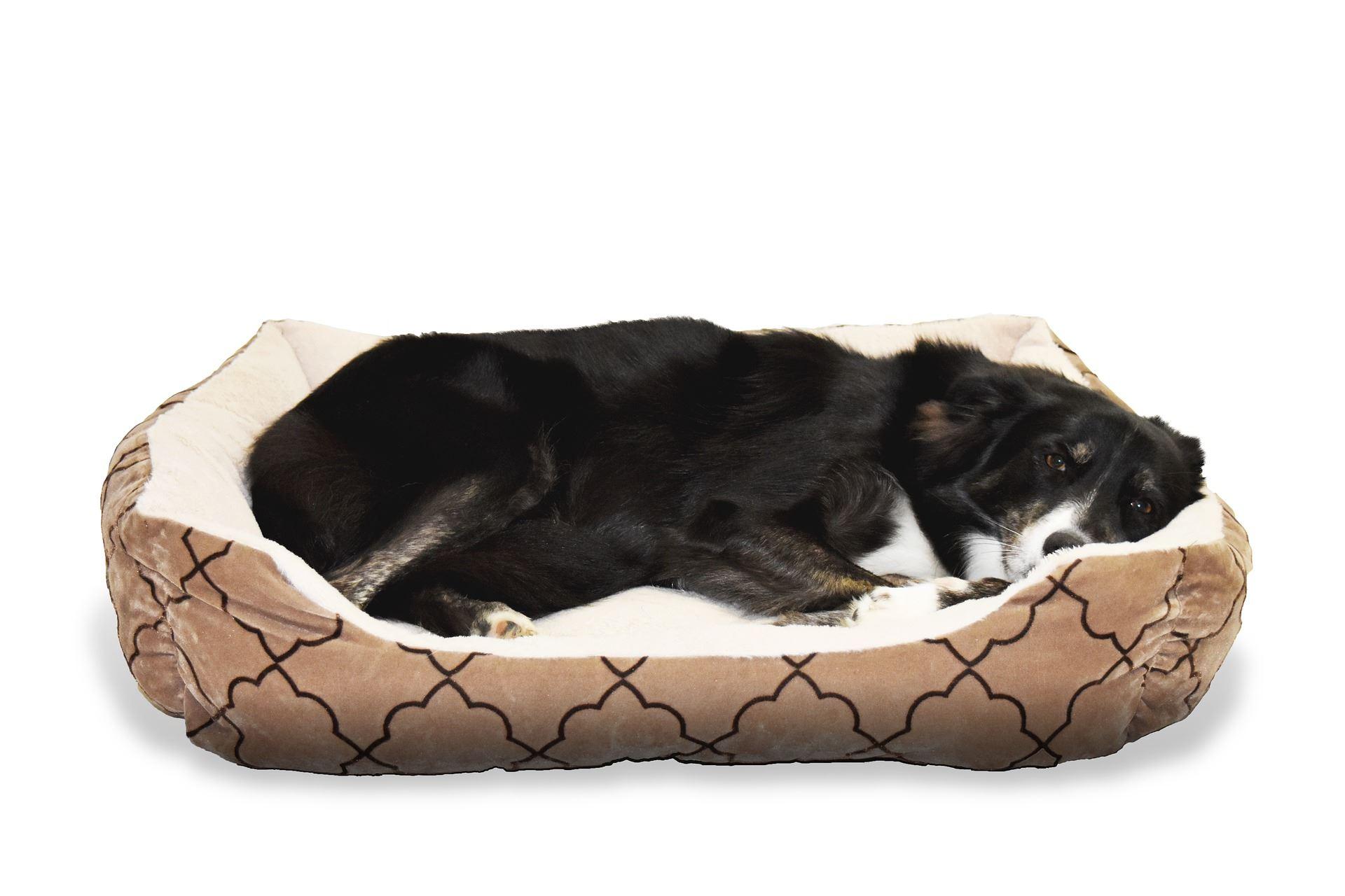Die richtige Größe des Hundebetts will gut gewählt sein.