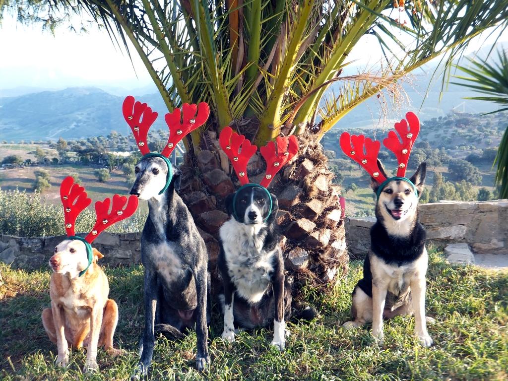Frohe Weihnachten wünscht der Hundebetten.shop