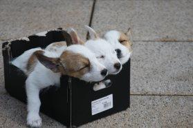 Kaufberatung für Hundebetten - Gesunder Hundeschlaf ist wichtig