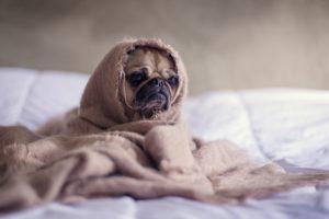 Kaufberatung für Hundebetten - Orthopädische Hundebetten