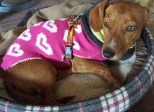 Damit der Hund nicht friert, sind warme Kleidung und Decken ein Muss